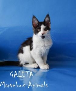 Galeta Marvelous Animals
