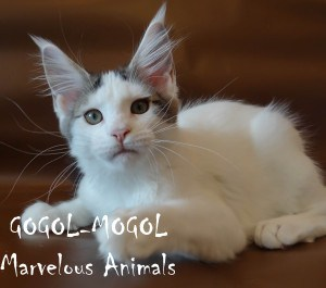 GOGOL-MOGOL Marvelous Animals