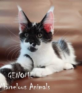 Genome  Marvelous Animals