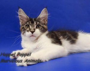 Hoppel Poppel Marvelous Animals